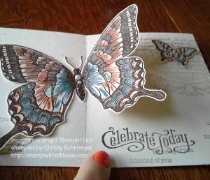 swallowtailpopclose